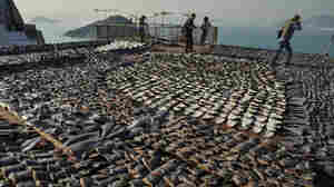 This file picture taken on January 2, 2013 shows shark fins drying on the roof of a factory building in Hong Kong.