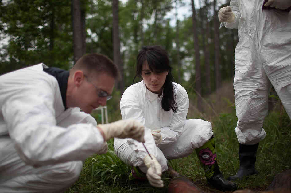 Sibyl Bucheli (center) and Rob Knight take soil samples from beneath one of the decomposing bodies.