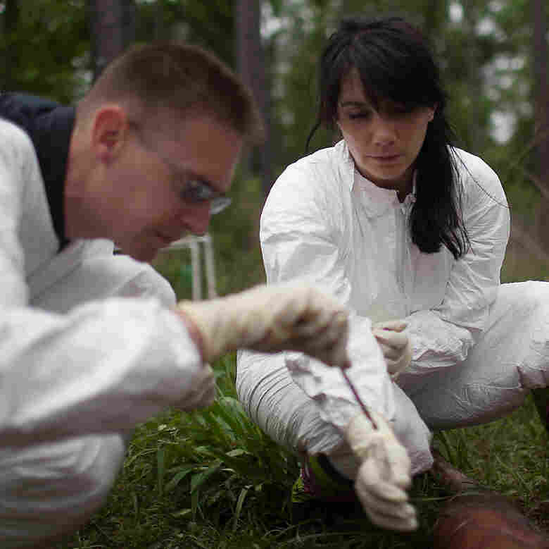 Knight (left) and Bucheli take soil samples from beneath one of the decomposing bodies.