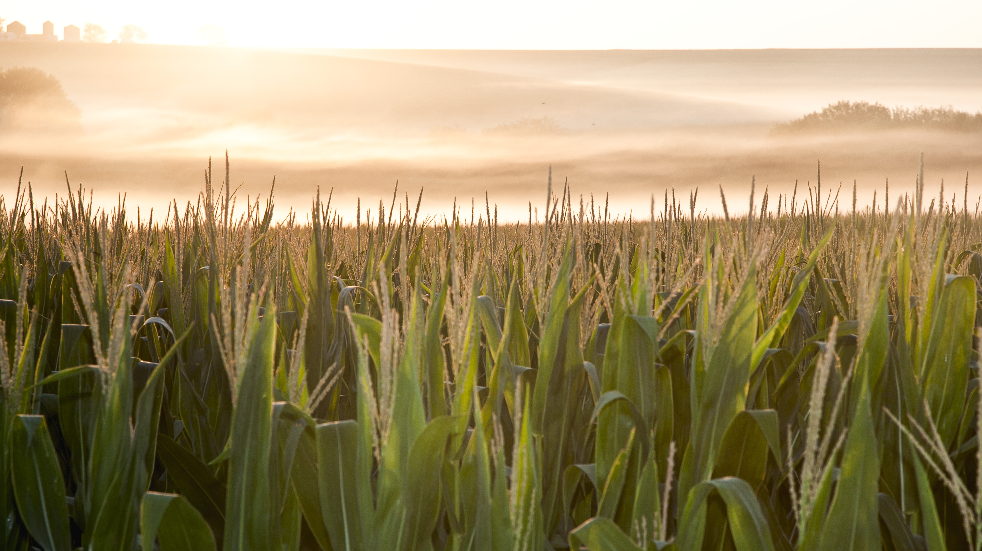 American Farmers Say They Feed The World, But Do They?