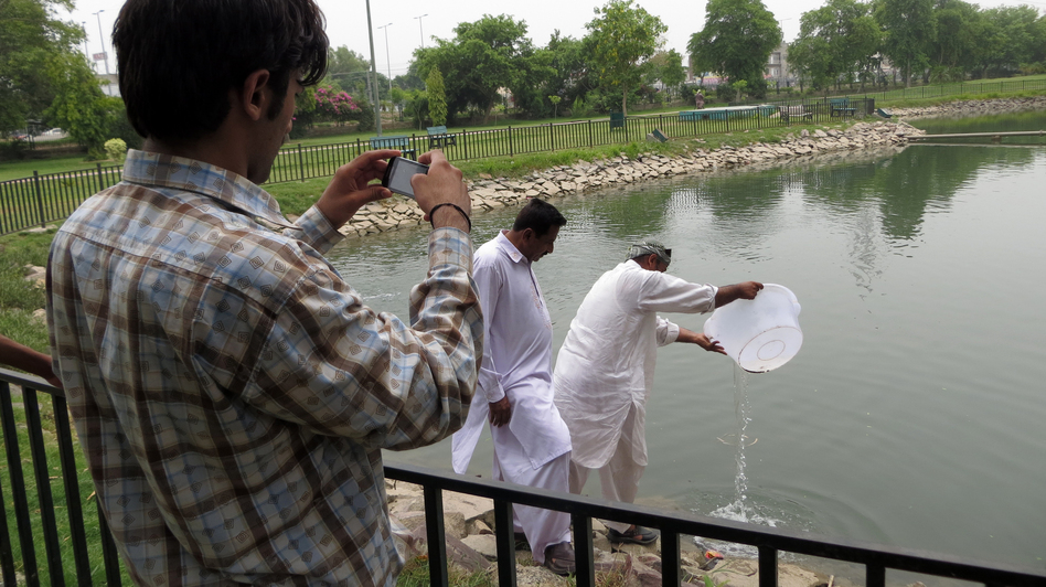 Workers drop tilapia fish into a small pond at a neighborhood park, as an inspector enters the activity into the Clean Lahore app. The fish eat the larvae of mosquitoes that spread dengue fever. (NPR)