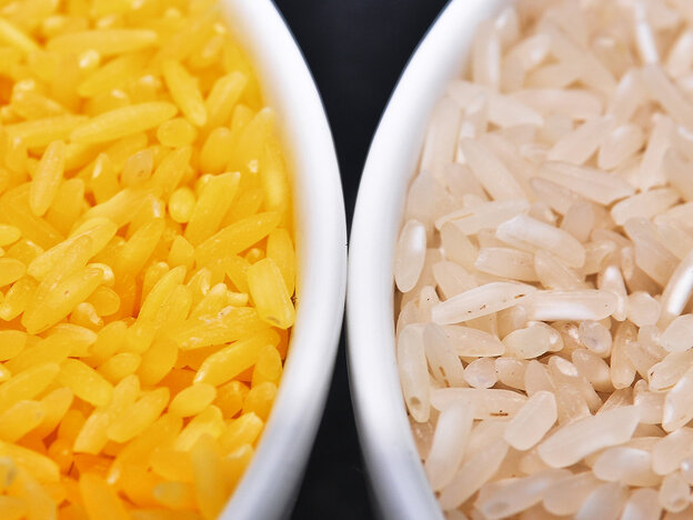 Genetically modified to be enriched with beta-carotene, golden rice grains (left) are a deep yellow. At right, white rice grains.