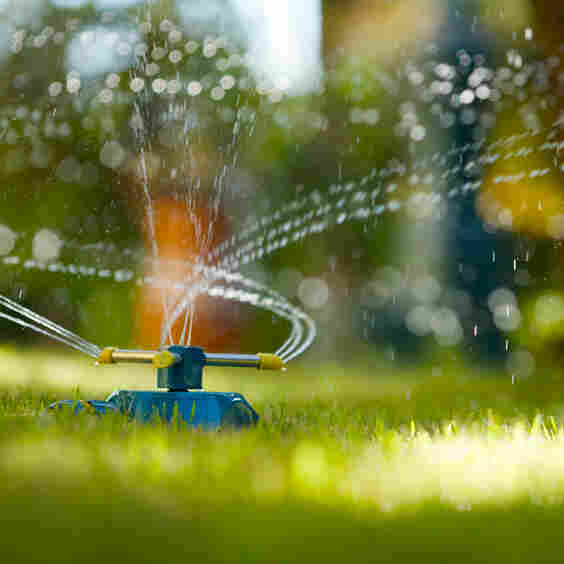 A sprinkler on a lawn