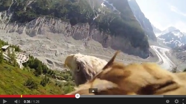 Put A Camera On An Eagle And What Do You Get? Soaring VIDEO