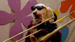 "A dog plays trombone in a new video for the song ""Boomerang,"" by Los Angeles singer Lucy Schwartz."
