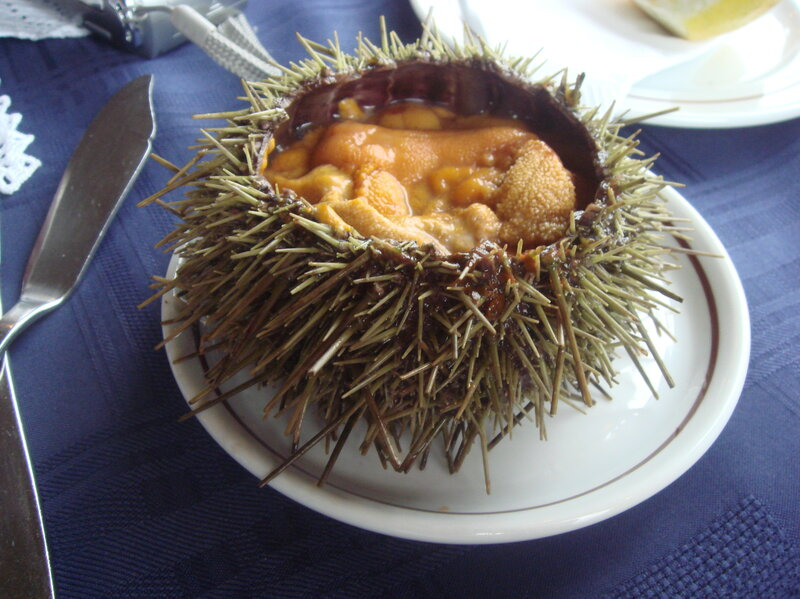 raising tastier sea urchins for foodies and the environment the