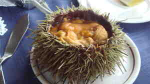 Sea urchins are considered a culinary delicacy, but supply can't keep up with demand.