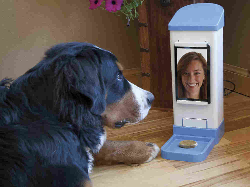 Your dog can hear your voice, see your face and get treats dispensed at your whim. Almost as good as the real thing!