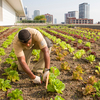 Stacey Kimmons and Audra Lewicki harvest lettuce at the Chicago Botanic Garden's 20,000-square-foot vegetable garden atop McCormick Place West in Chicago.