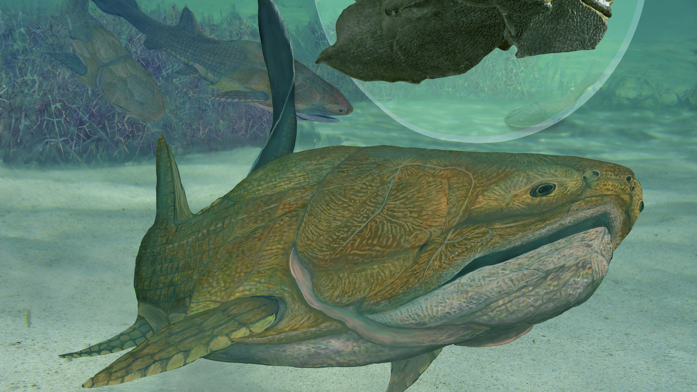 Ancient Fish With Strong Jawline Could Rewrite History Of Faces