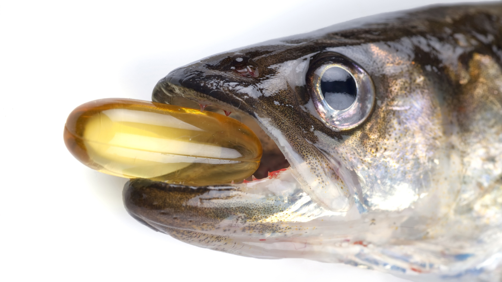 Why Can't Fish Oil Supplements Keep Our Brains Sharp?