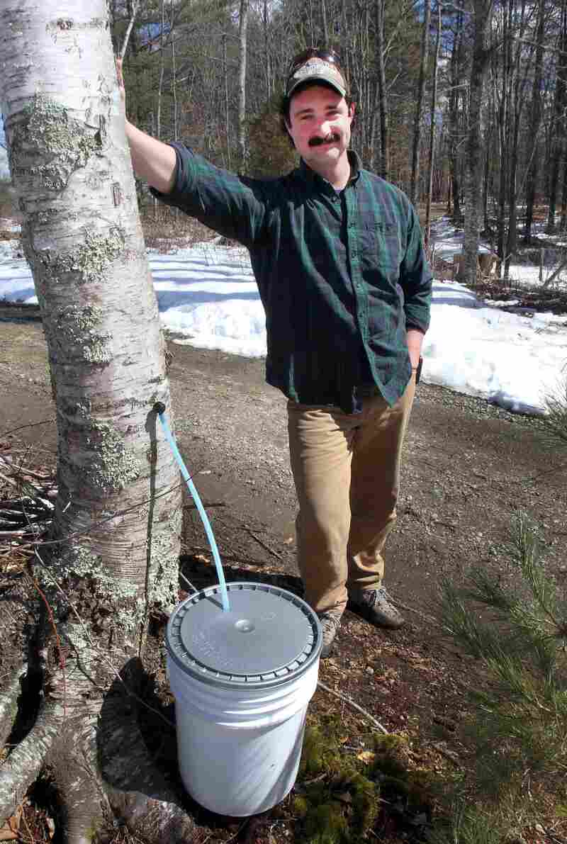 David Moore of the Crooked Chimney sugarhouse poses in front of one of his tapped white birch trees, in Lee, N.H. Moore produces commercial birch syrup.