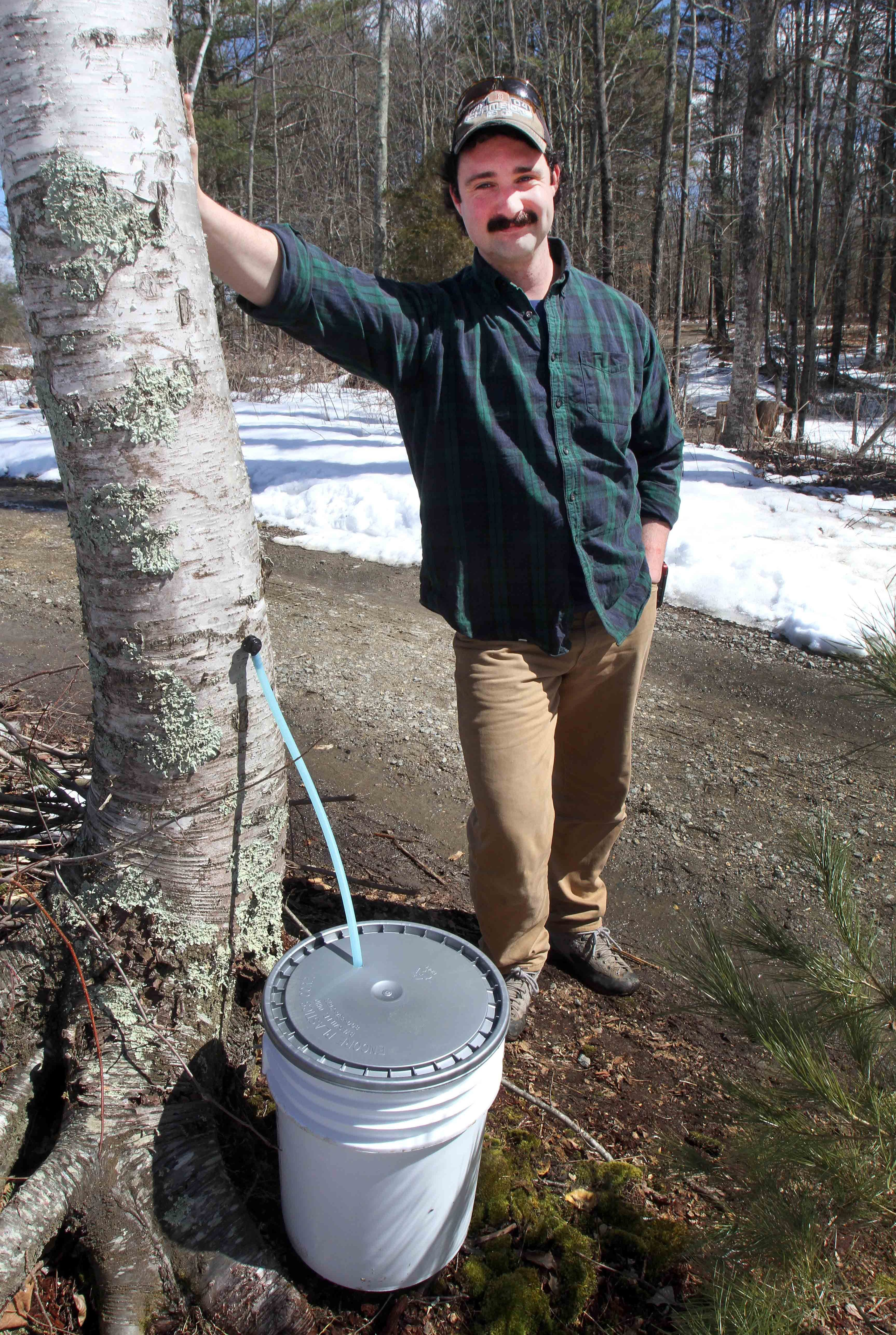 Birch For Breakfast? Meet Maple Syrup's Long-Lost Cousins