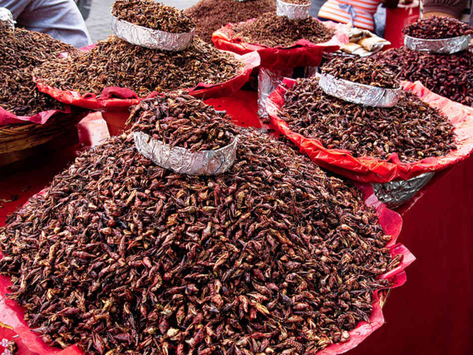 MBA students from McGill University in Montreal are building a company to mass produce grasshoppers, seen here at a market in Oaxaca, Mexico.