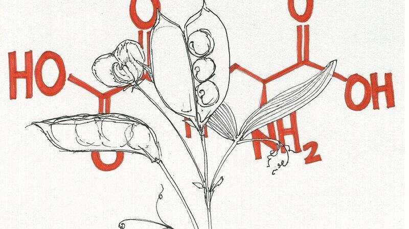 When Edible Plants Turn Their Defenses On Us : The Salt : NPR
