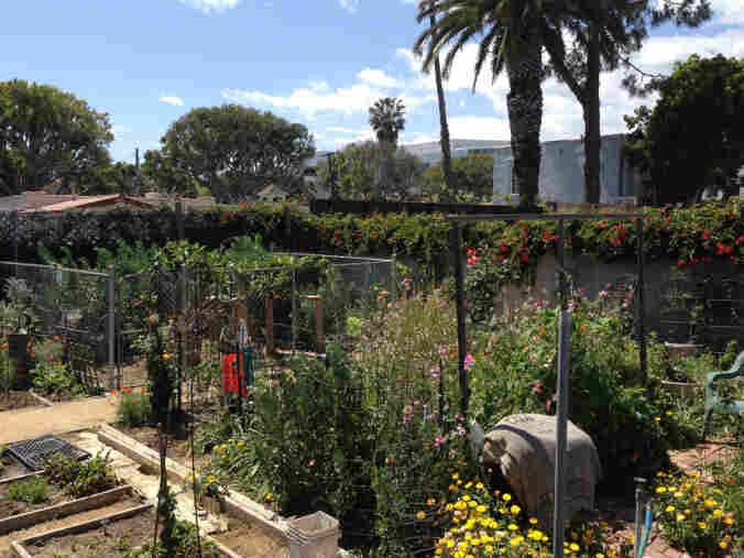 A garden in Santa Monica, Calif.