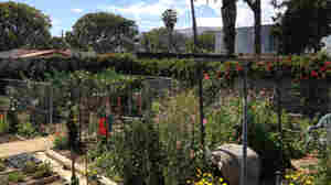 Of Goats And Gardens: Making Sense Of Urban Agriculture In LA