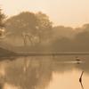 Marshland in India