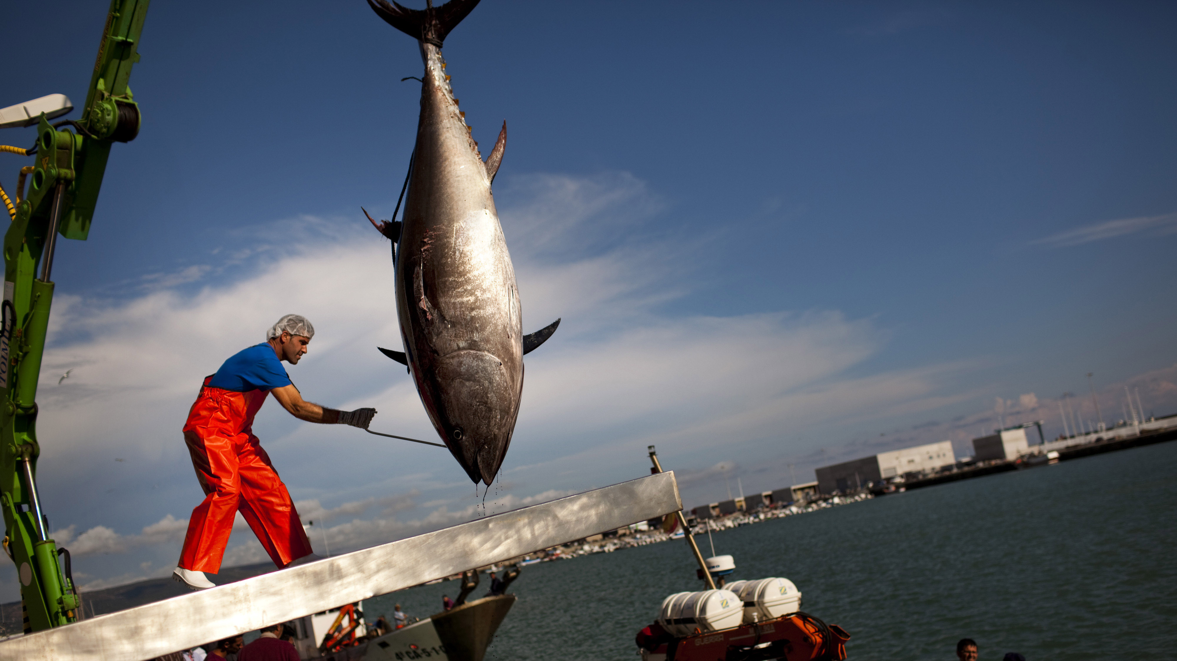 Fish for dinner here are a few tips for sea life lovers for Tuna fishing season