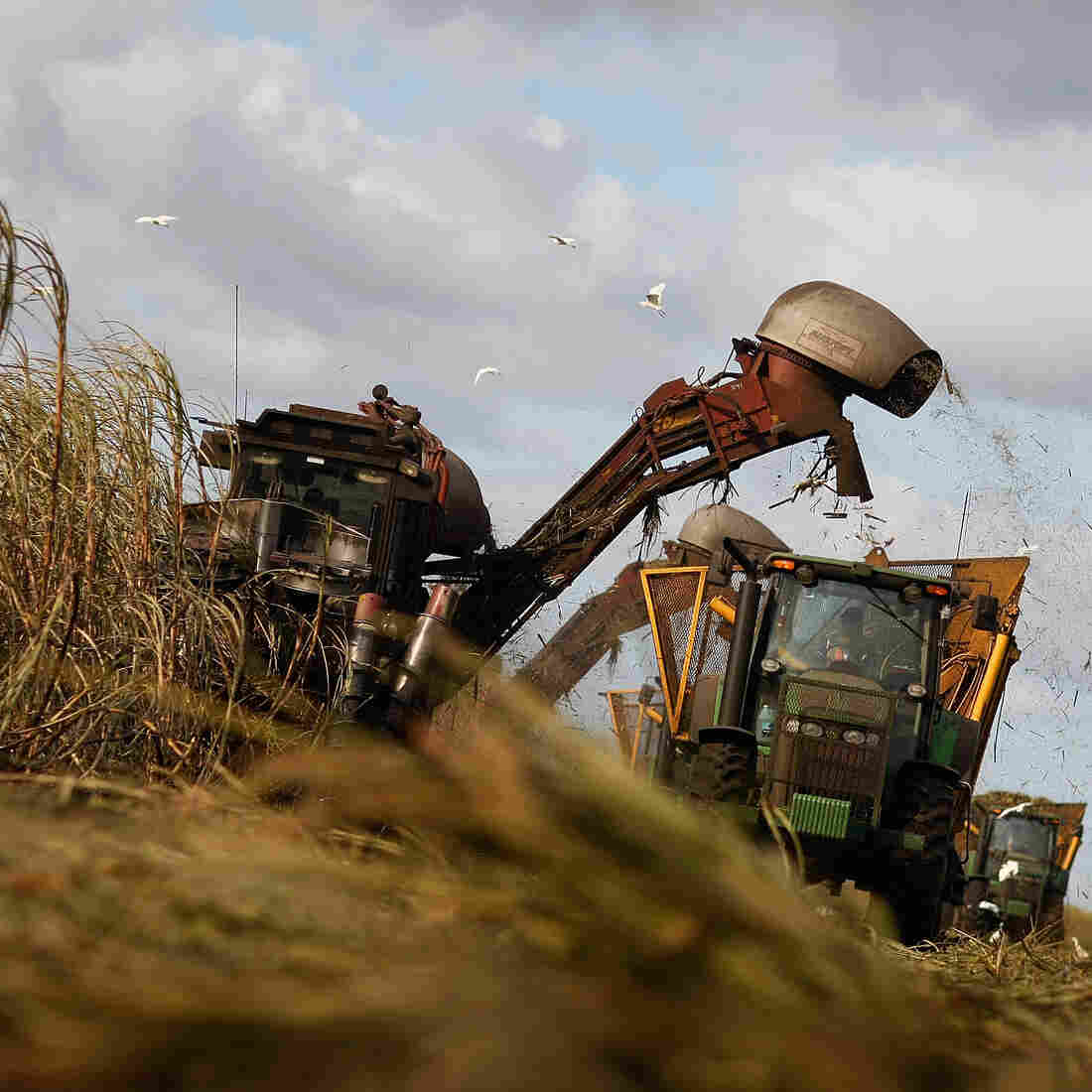 Mechanical harvesters cut sugar cane on U.S. Sugar Corp. land in Clewiston, Fla., in 2008, the same year the state struck a deal to buy most of the company's Everglades holdings.