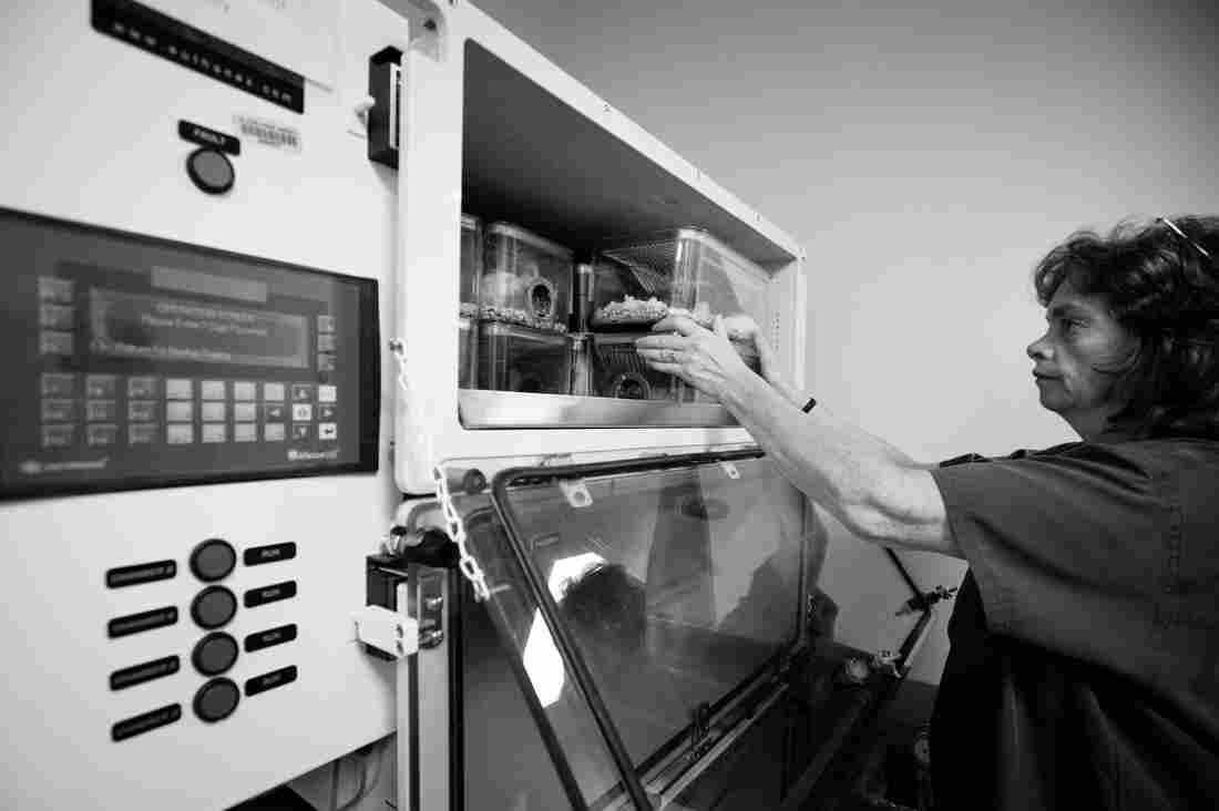 Ginny Miller, an animal care specialist, places mice into a machine that will first anesthetize, then euthanize the mice by slowly increasing the level of carbon dioxide in the air.