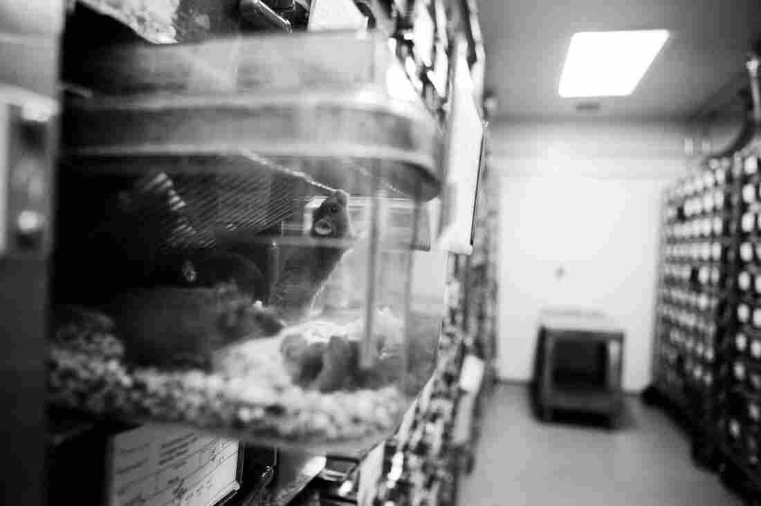 The facilities at Johns Hopkins University house nearly 200,000 mice.