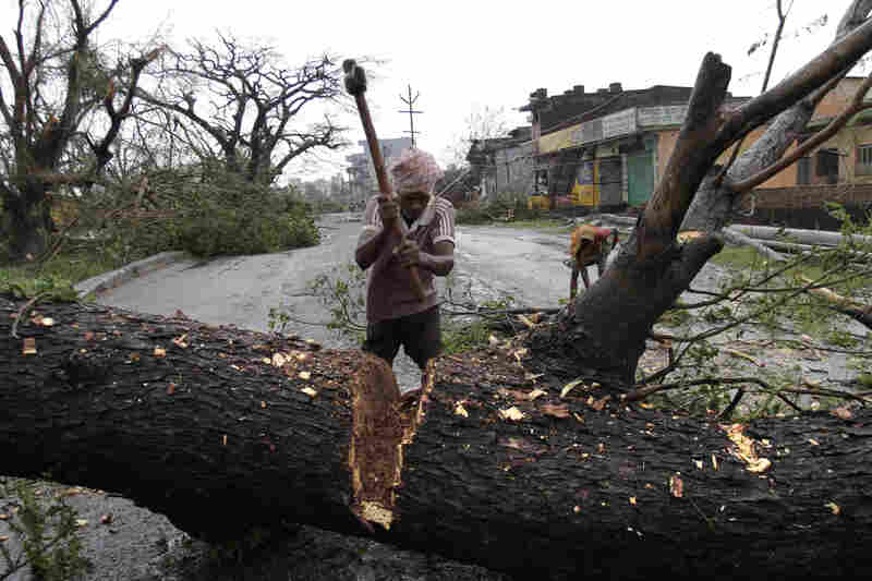 A municipal workers cuts an uprooted tree to clear a main highway in Berhampur. The immense and powerful cyclone that lashed the Indian coast forced nearly 1 million people to evacuate from the coast.