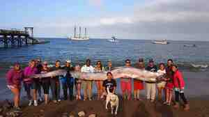 People hoist the body of an 18-foot oarfish that was discovered in Toyon Bay at Catalina Island off the California coast.