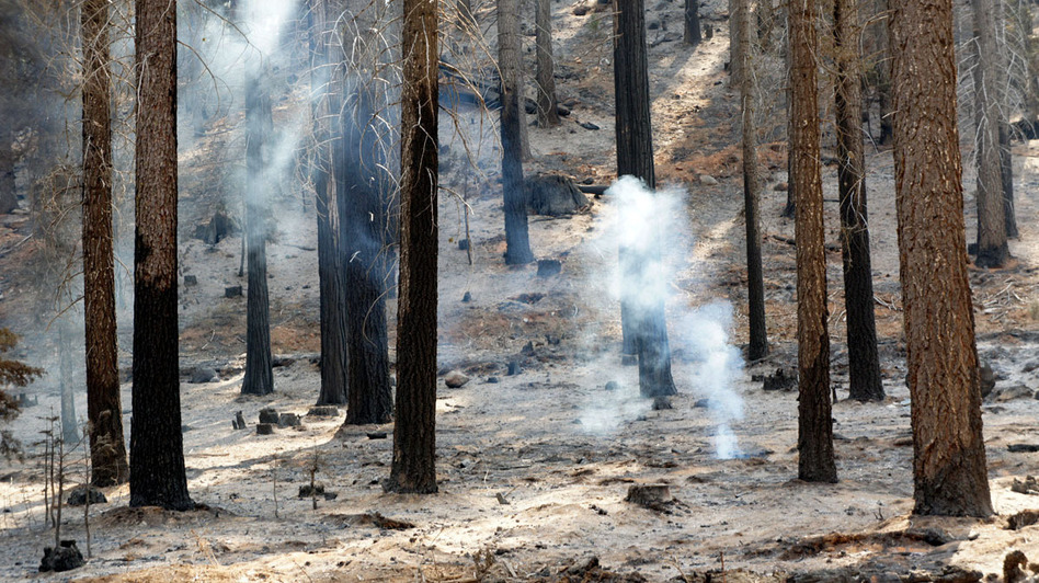 A hot spot smolders in the burn area of the Rim Fire in Yosemite National Park. (KQED)