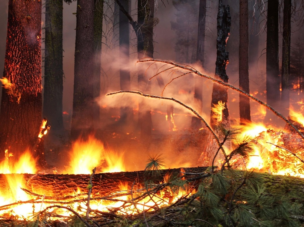 Fuel In The Fire: Burn Wood For Power Or Leave It To Nature