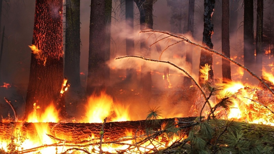 At more than 400 square miles, the Rim Fire is the largest Sierra Nevada fire in recorded history. (US Forest Service)