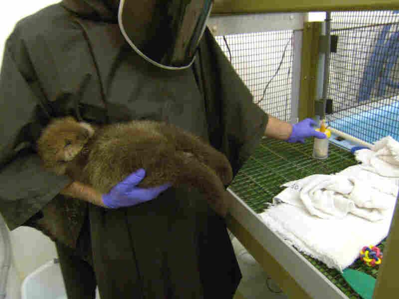 Baby otter. AWWWWW.