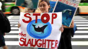 Demonstrators at a rally in Tokyo on August 31 protest against the start of Japan's annual dolphin hunt in Taiji.