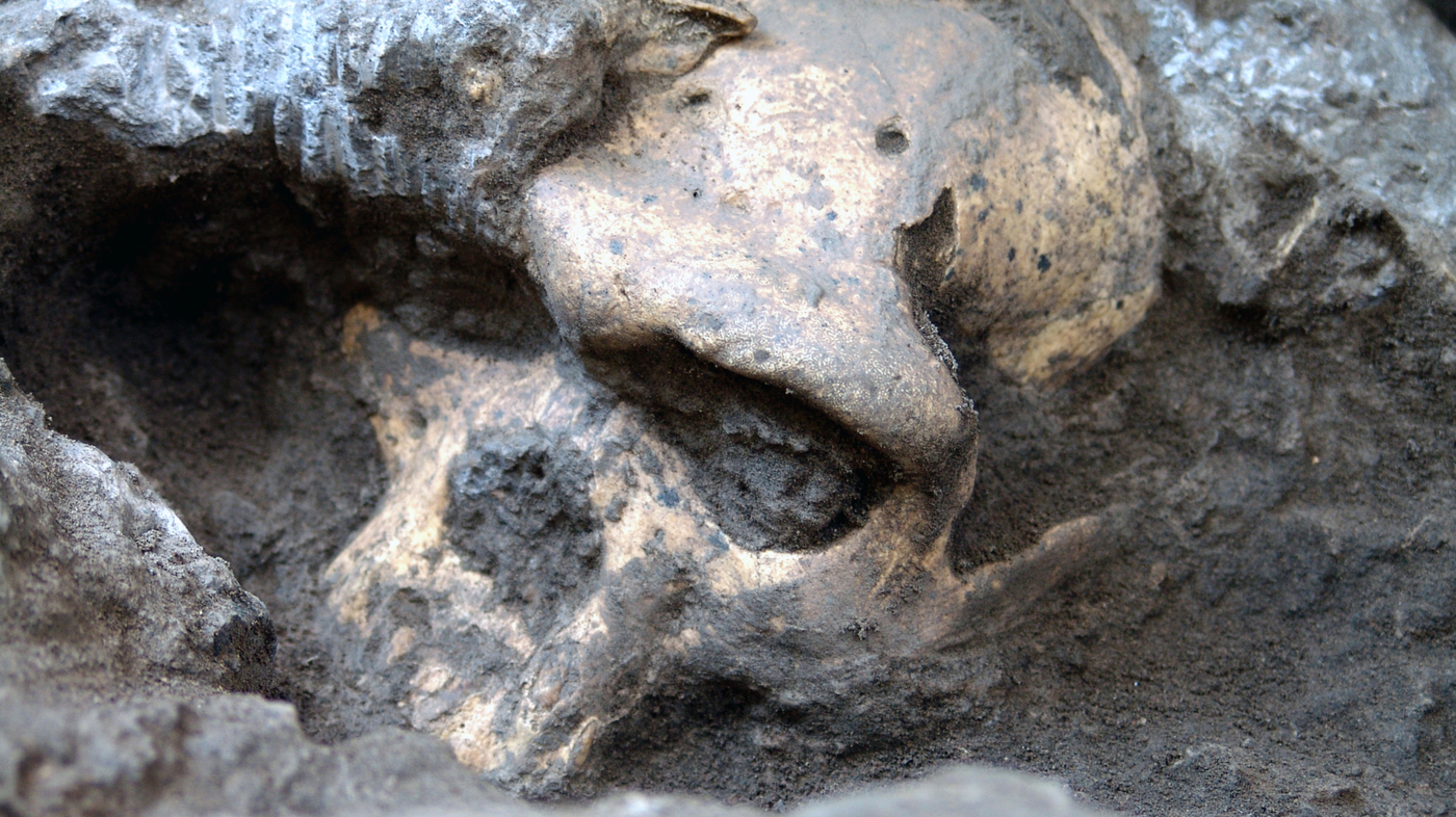 Fossil Find Points To A Streamlined Human Lineage