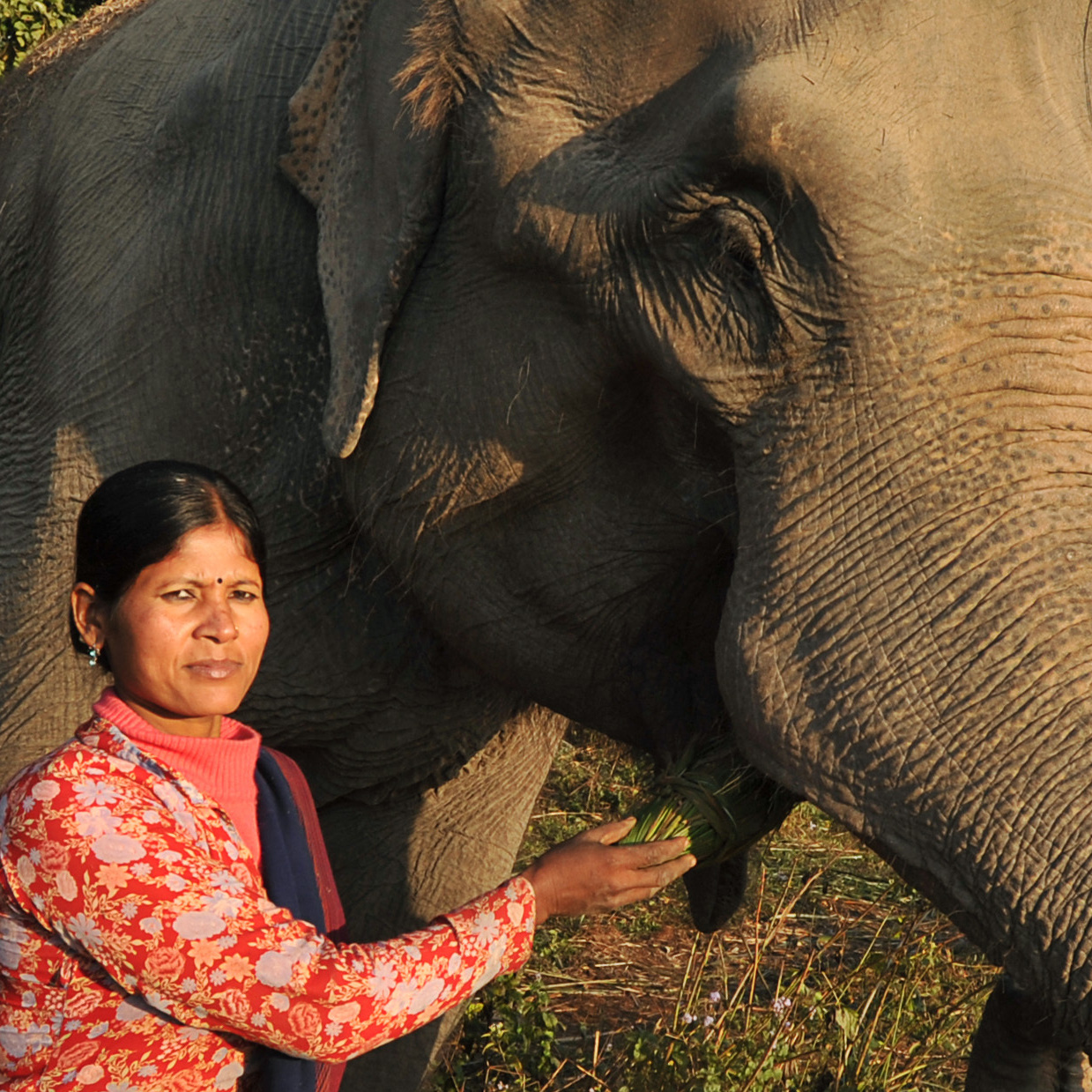 A Nepalese mahout feeds an elephant at Sauraha in Chitwan, southwest of Kathmandu.
