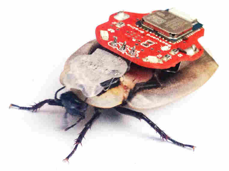The RoboRoach device allows users to influence the movements of cockroaches with a smartphone.