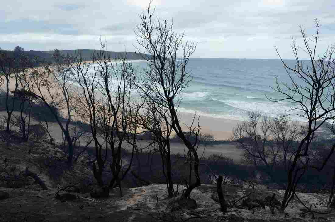 The charred headland at Catherine Hill Bay near Wyong on the Central Coast of New South Wales, Australia.