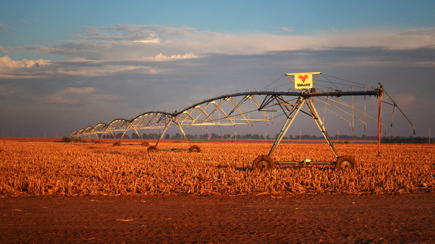 The long arms of pivot irrigation rigs deliver water from the Ogallala Aquifer to circular fields of corn in northwestern Kansas. (NPR)