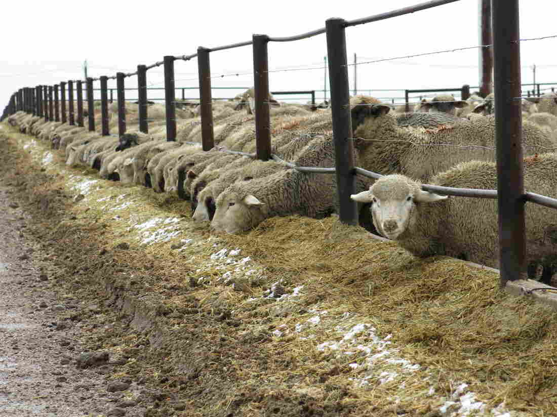 Ranches like Double J Feeders in Ault, Colo., are feeling the industry contraction, whether it's caused by epic drought, scarce feed supplies, harsh winters or wild price volatility.