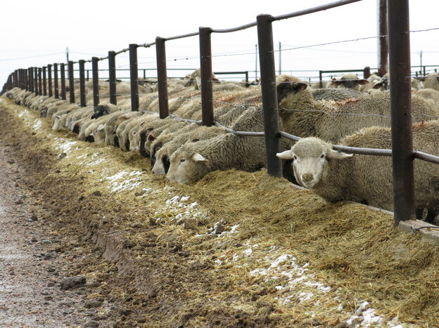 Ranches like Double J Feeders in Ault, Colo., are feeling the industry contraction, whether it's caused by epic drought, scarce feed