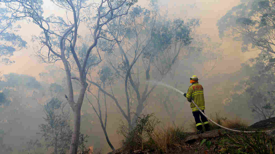 A firefighter hoses down the flames in a backburn at Faulconbridge in Australia's Blue Mountains on Tuesday. The inferno is one of the stories making headlines around the world.