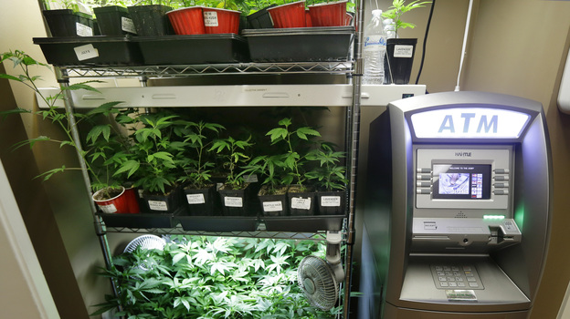 An ATM sits next to a rack of marijuana clone plants that are used to grow medical marijuana on Wednesday at The Joint, a medical marijuana cooperative in Seattle. Last week Washington became the second U.S. state to adopt rules for the recreational sale of marijuana. (AP)