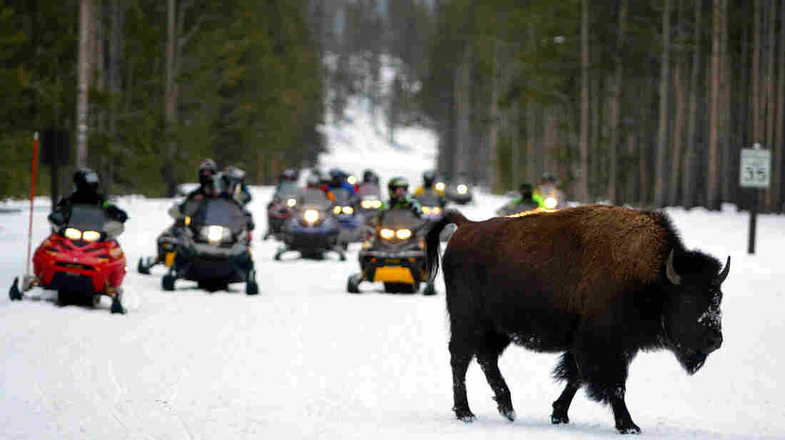 A bison crosses a road ahead of a herd of snowmobilers in Yellowstone National Park in 2003. New federal rules announced Tuesday will further restrict the noise and exhaust such vehicles are allowed to emit inside the park.