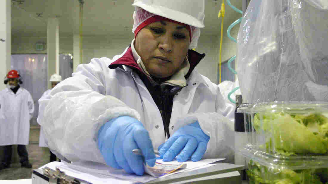 Maricruz Ladino packs lettuce in a cooler in Salinas, Calif.