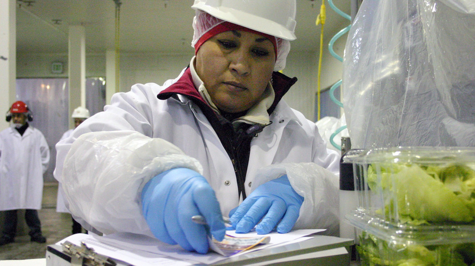 Maricruz Ladino packs lettuce in a cooler in Salinas, Calif. (Center for Investigative Reporting)