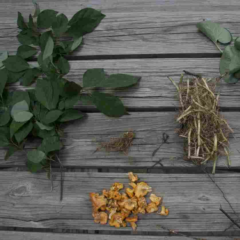 The brewers at Scratch Brewing Company add wild plants like spicebush, goldenseal, wild ginger, chanterelles and wild rose root to their beer to give it the flavor of the Illinois woods.