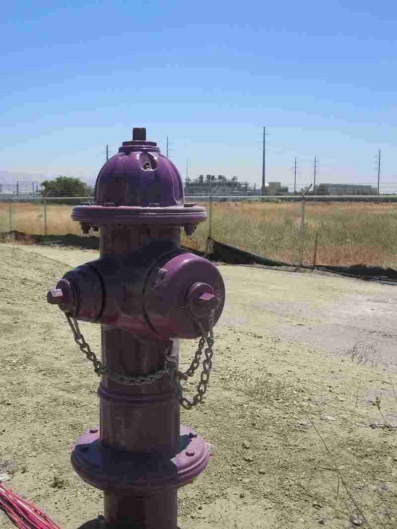 Purple hydrants carry purified wastewater, mostly intended for landscaping.