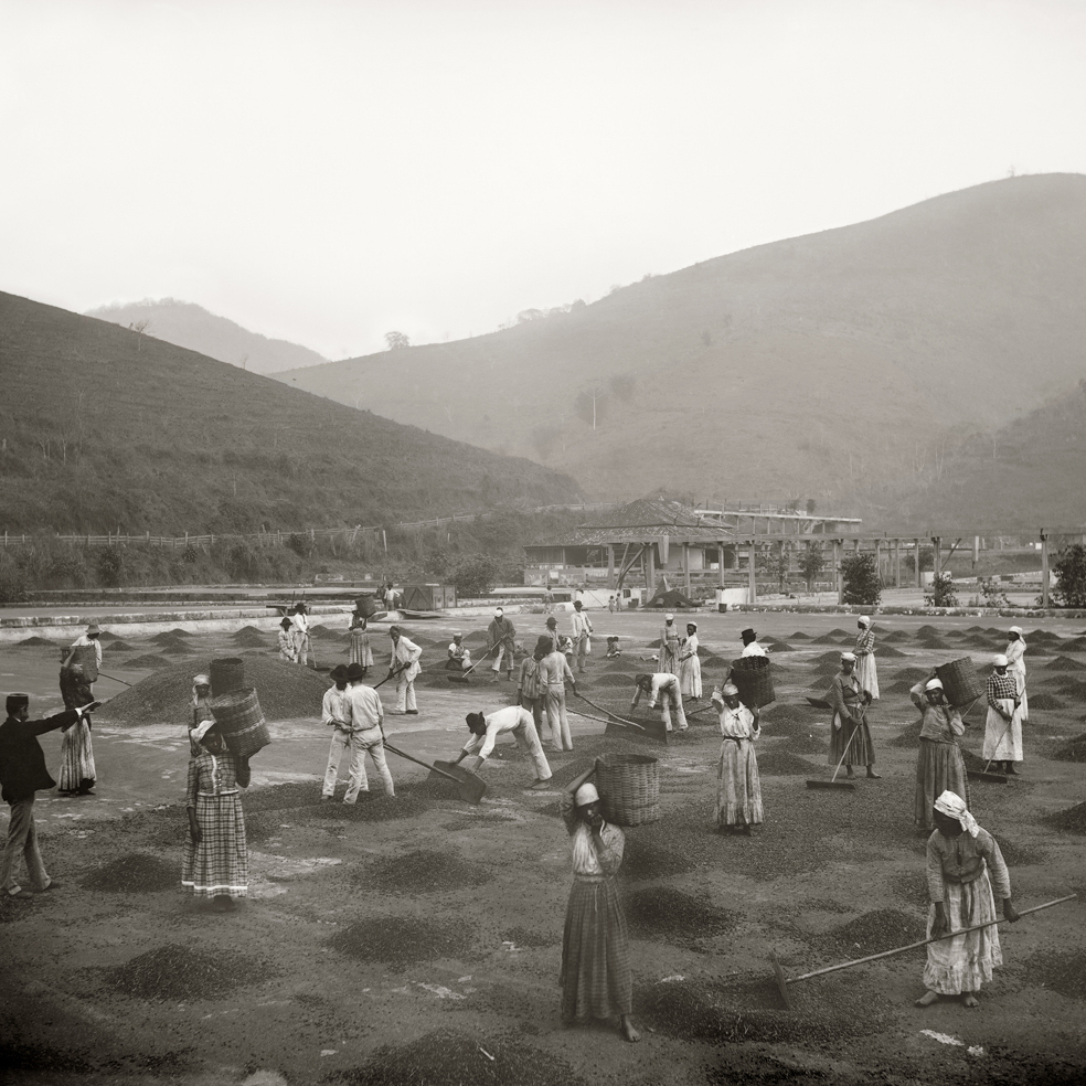 Slaves at a coffee yard in a farm. Vale do Paraiba, Sao Paulo, 1882.