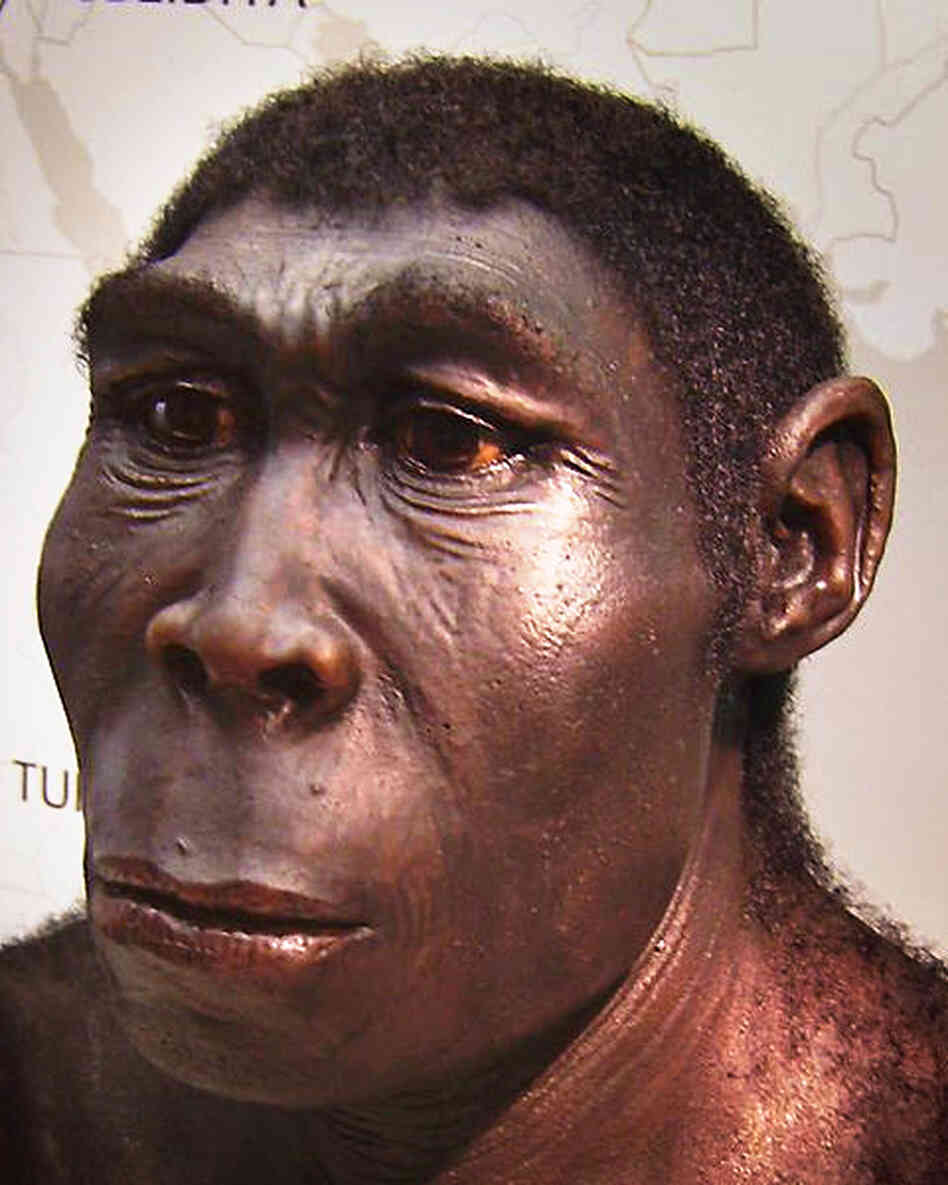 More than a million years ago, our ancestor Homo erectus probably gained the ability to detect bitter flavors. So would he have enjoyed an espresso macchiato?
