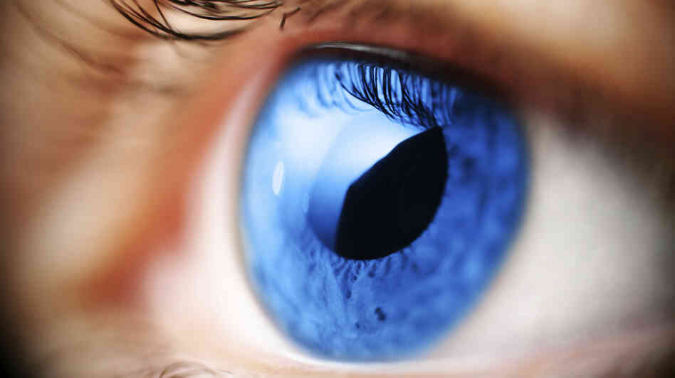 Estrogen affects cells in the eye's retina, which may help explain a possible link between glaucoma and estrogen levels.